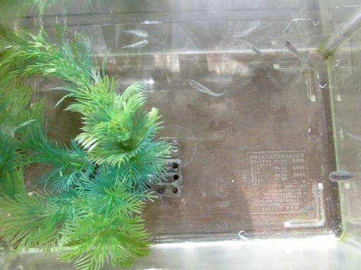 amedaka1203-2.jpg
