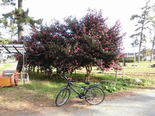 asahi1204-8.jpg