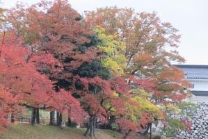富山城のお堀の紅葉