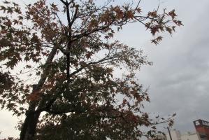 富山城の堀のそばの木立