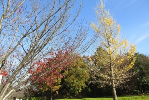 つつじの丘公園の紅葉