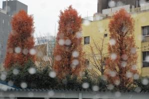 大手公園の紅葉と雨滴