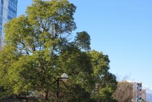 厚木中央公園、常緑樹
