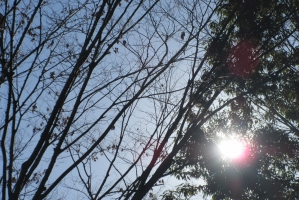 厚木中央公園、木漏れ日
