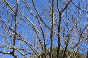 厚木中央公園、冬の落葉樹