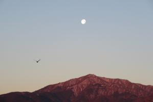 2月9日の大山