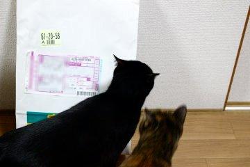 kotamiyu74.jpg