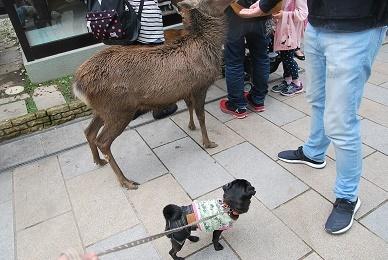 鹿さん、それ美味しいでしゅか?