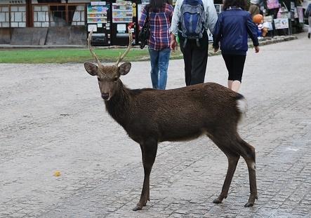 鹿ですけど・・・