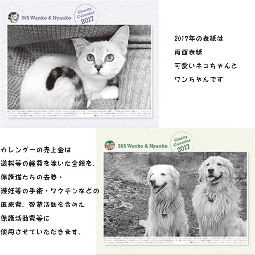 cats1_20161213145447852.jpg