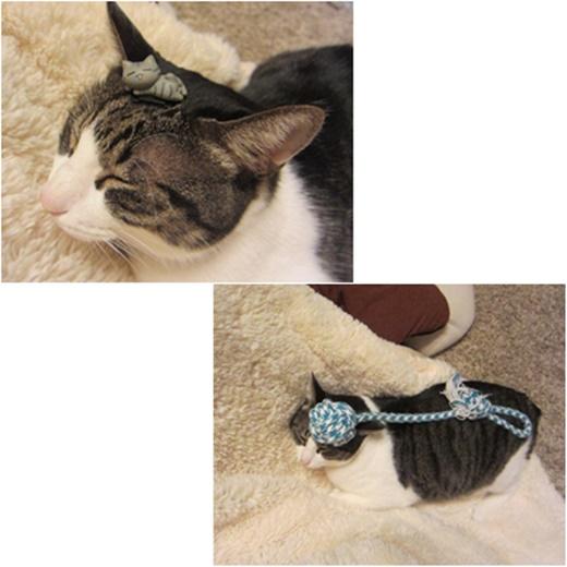 cats1_2017020821152703a.jpg