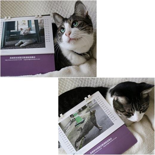 cats2_201612131534099a7.jpg