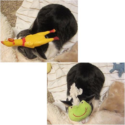 cats3_201611212032257d6.jpg