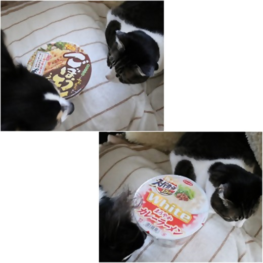 cats3_20161225144008927.jpg