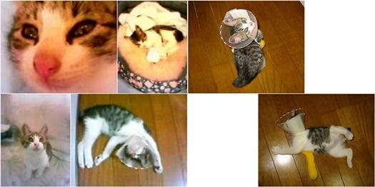 cats5_201612131532445ce.jpg