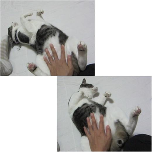 cats_2016112223171381f.jpg