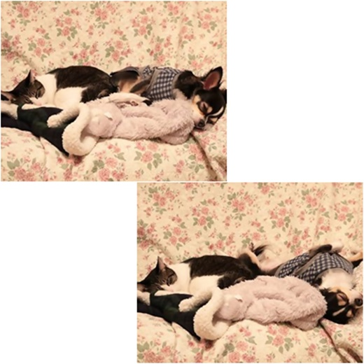 cats_201612042111078da.jpg