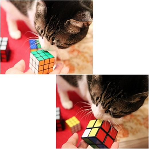 cats_20161223195448d31.jpg