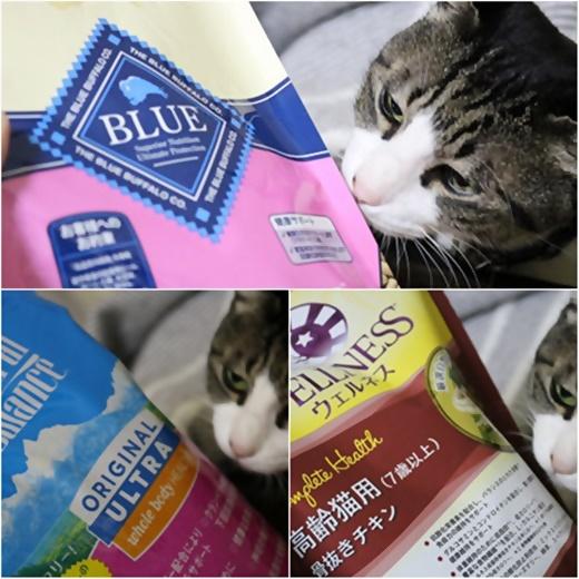 cats_20170107182213bf4.jpg