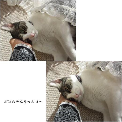 cats_2017020717472527d.jpg