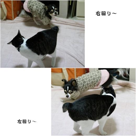 cats_2017021320360695d.jpg