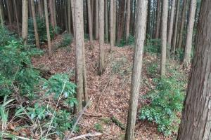 igamaruyama (5)