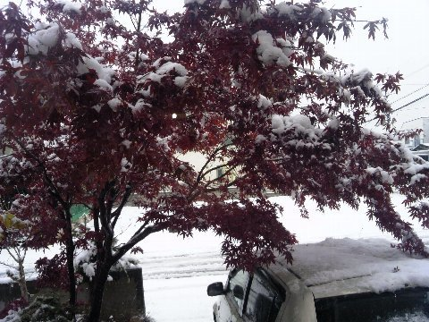朝起きたら雪景色