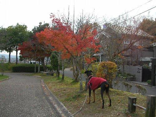 201612011430四季の森⑦-1