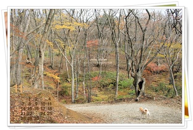 201611 晩秋の森のめぐ小