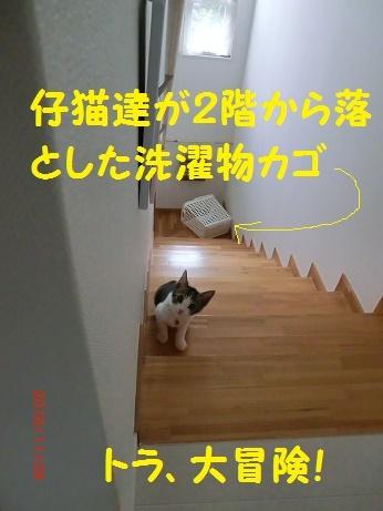 CIMG6485.jpg