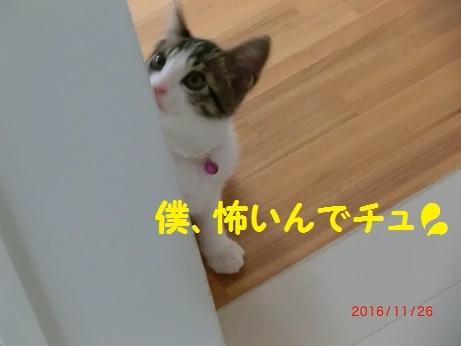 CIMG6487.jpg