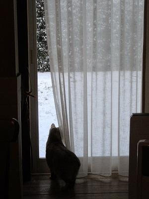 雪だわ・・