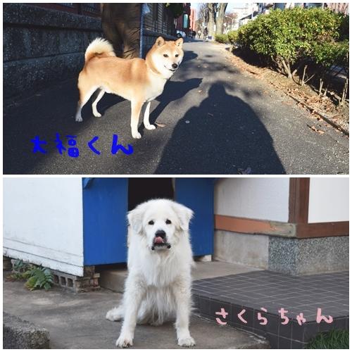 正月散歩5