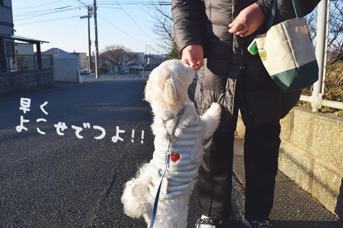 正月散歩8