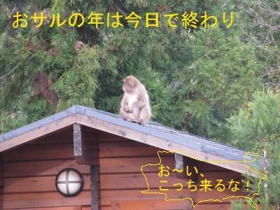 4月9日サル被害