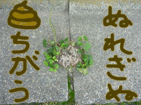 20120623-026_s.jpg