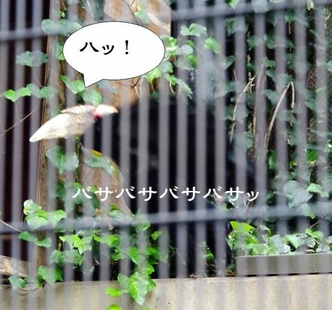 #福岡市動物園 #シワコブサイチョウ トト君とキッキちゃん