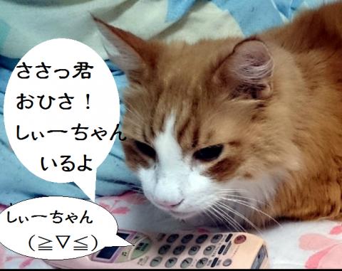 しぃーちゃん
