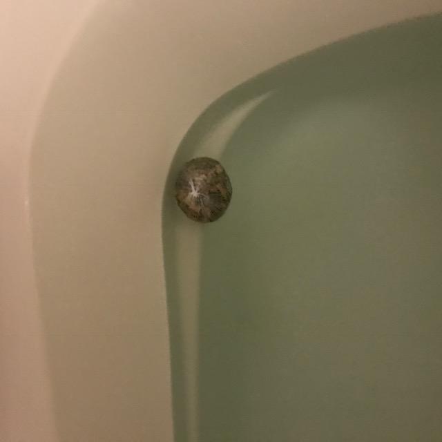 まこも風呂2