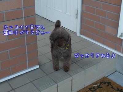 5ij_LJJSUrwa1dP1480324706_1480324937.jpg