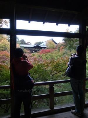 東福寺通天橋紅陽1611