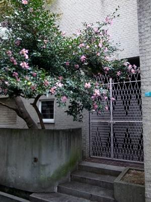 村野・森建築事務所1611
