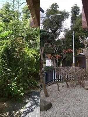 tanakatakaⅣ庭園1612