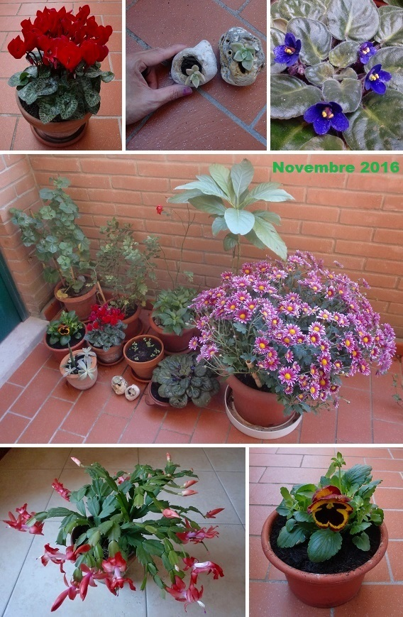 CIMG8709-2016植物②