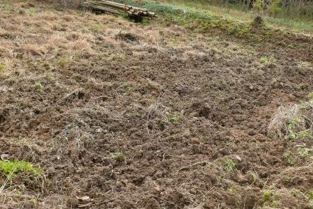 イノシシが耕した畑