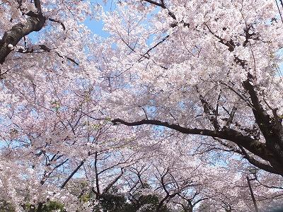 takaido-street44.jpg