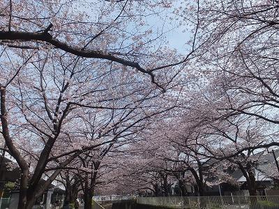 takaido-street50.jpg