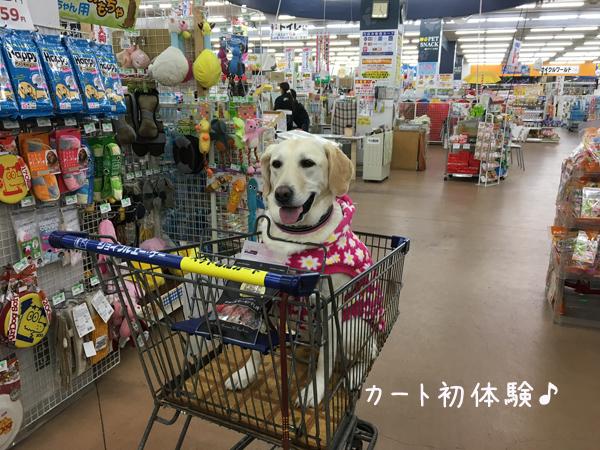 cart_20161220220752120.jpg
