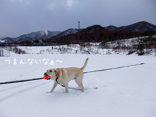 erihitori_20161109162118477.jpg