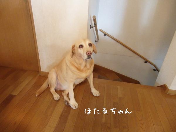 hotaru_20161208112948c1c.jpg
